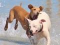 dog-beach-toscana.jpg